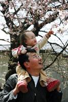 桜が咲いてるよ!