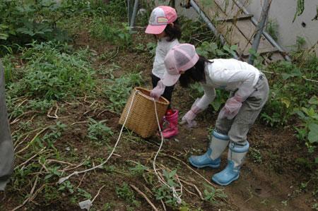 これから芋掘りはじめまーす
