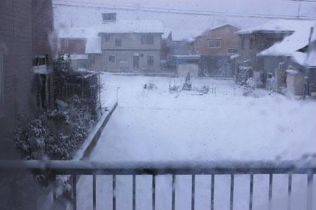昨日からの雪で真っ白