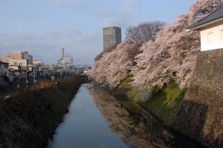 桜。お堀。霞城セントラル