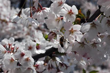 蜜をとる蜂たち