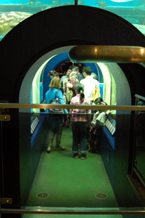 水槽にトンネルを設けたのは実は、、、